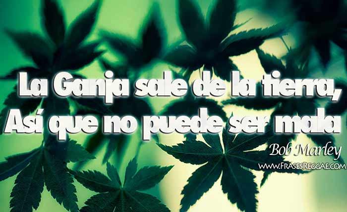 « La Ganja (Marihuana) sale de la tierra, así que no puede ser mala». En una entrevista