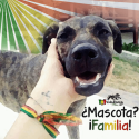 amor por los animales perro familia mascota vidarasta