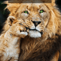 el leon no tendria melena si se dejara esquilar reggae rasta